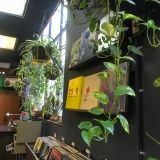 Plants in the record section